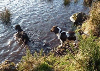 Duffy goes in after a stick while Daisy watches!