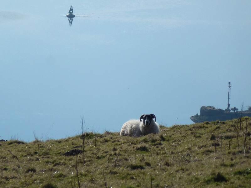 ram resting on kilpatrick hill