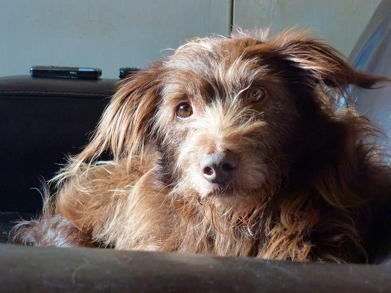 Dog on sofa!