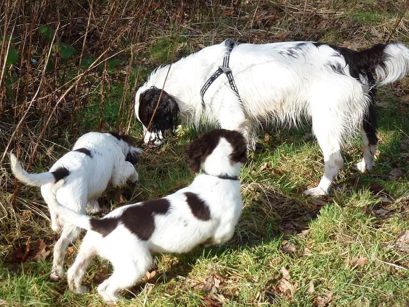 The pups meet Max!