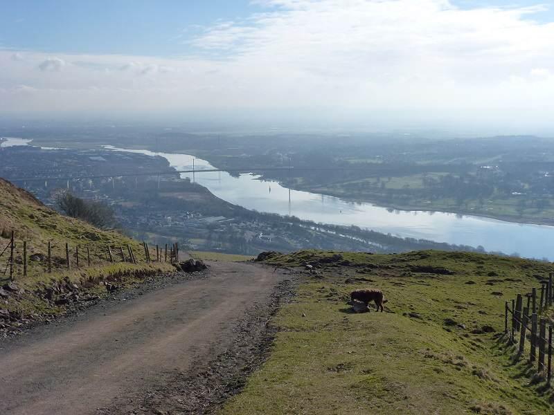Dog walking the Kilpatrick hills