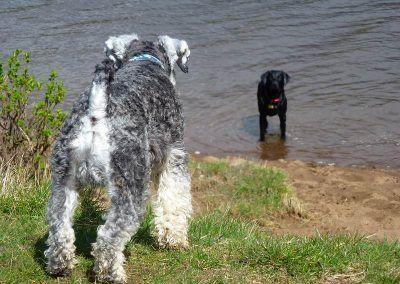 dogs on sunny beach