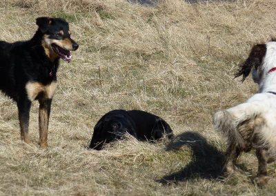 Tyla and Nevis play with Beau in the middle!