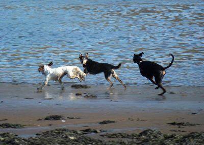 A sprint on the shoreline!