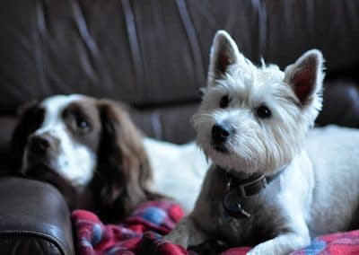 Jack with Nevis staying at my house
