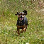 Happy wee dog