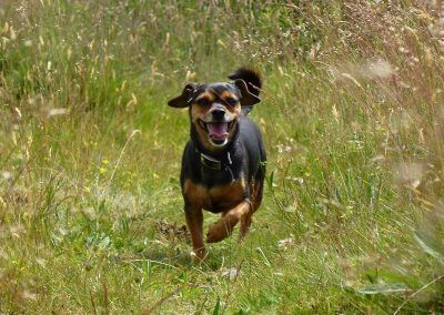 Happy dog, Chilli!