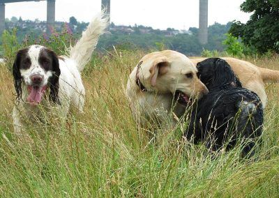 Nevis, Hugo and Benny are all young and very friendly!