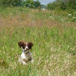 Springerbouncing through the long grass!