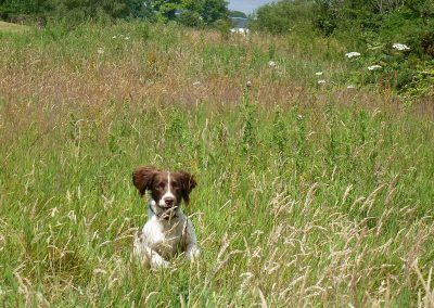 Bruno bouncing through the long grass!