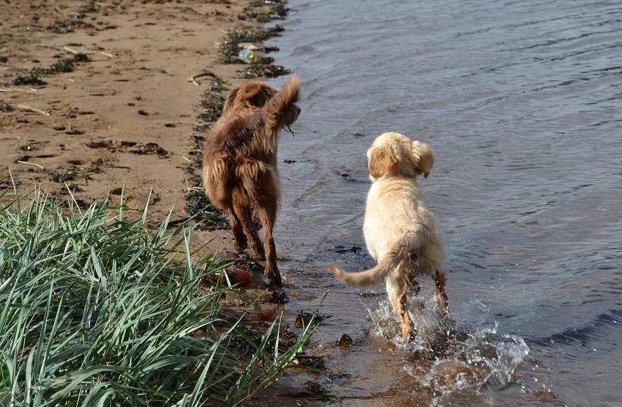 Dogs runing on beach