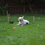 puppy play in garden