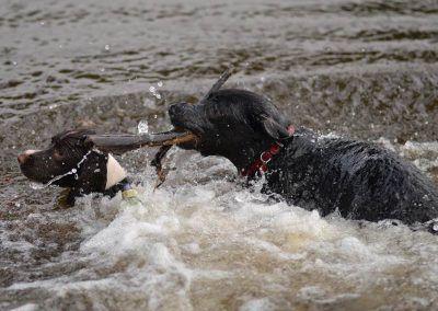 Jasper and Bruno