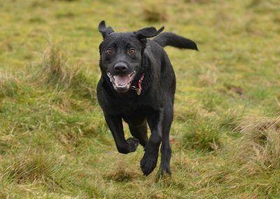 jasper running
