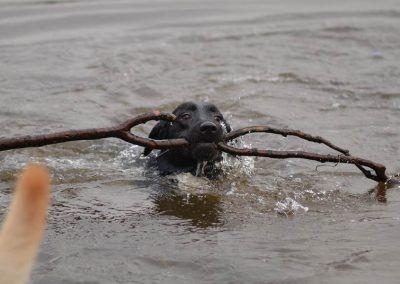 Jasper with stick