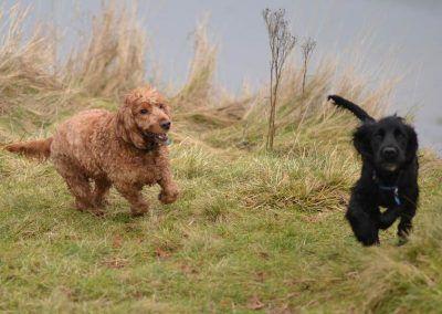 Jay chasing Rocky
