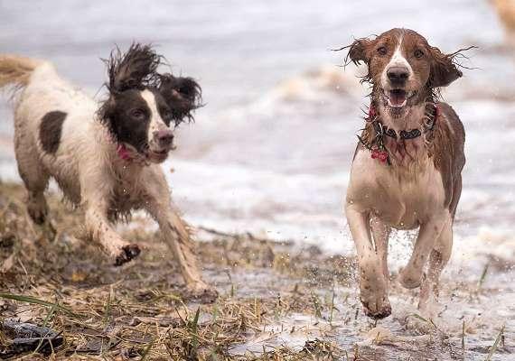 Bishopton dog walking
