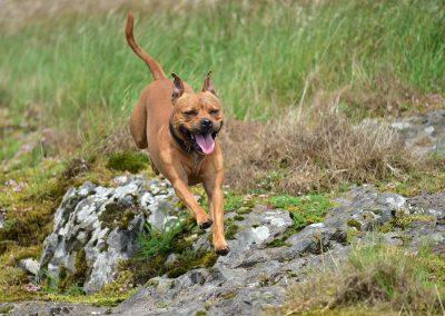 Levi running