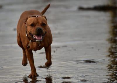 Levi on the beach