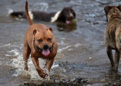 Levi running through water