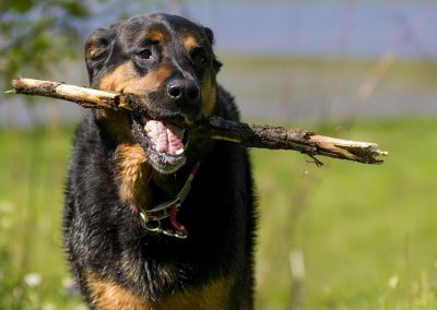 Bruno with stick