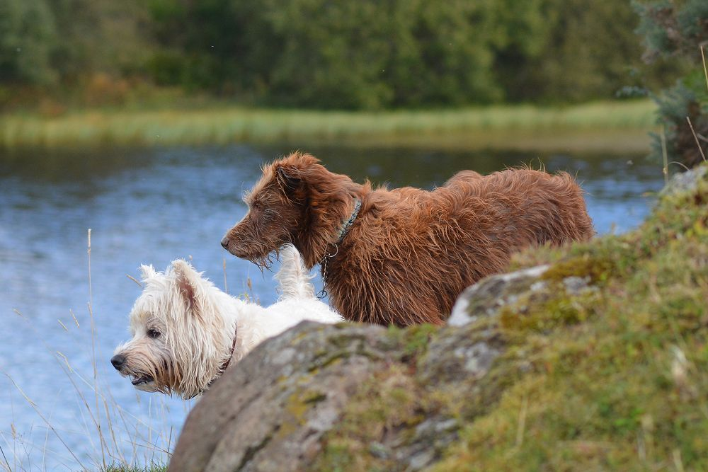 dogs looking into knapps loch
