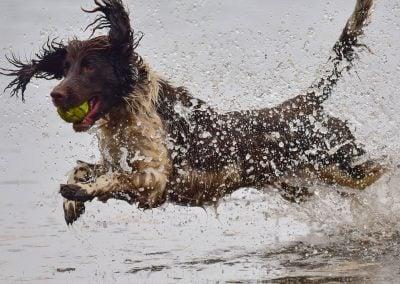 Flo dives into a river