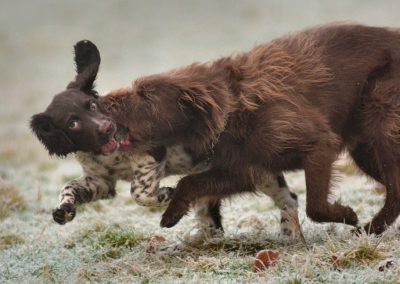 Flo and Ruby playing on frosty grass