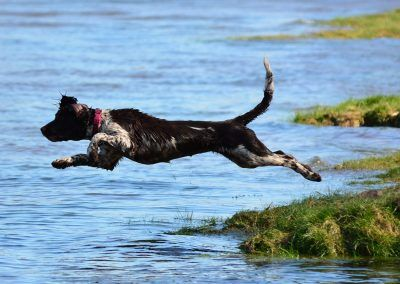 Flo diving into Clyde to get ball