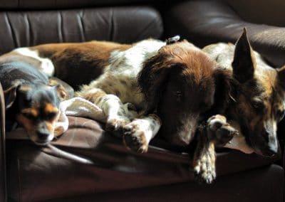 Molly sleeping alongside Flo and Chilli