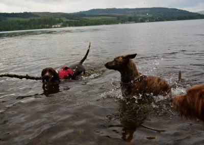 Molly and my dogs at Balloch Country Estate