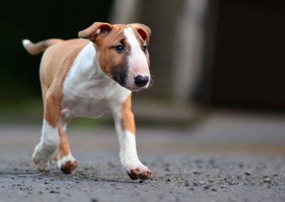 Running to mumma