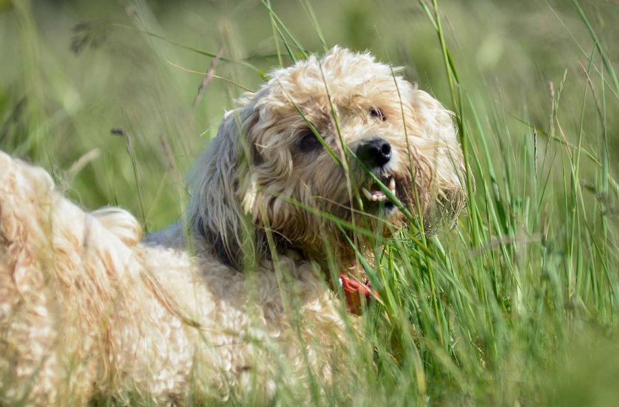 toy dog in long grass