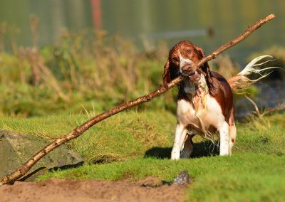 Celyn with big stick