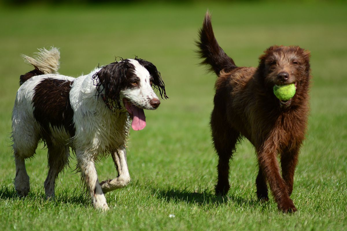 dogs-with-ball-on-sunny-day.jpg
