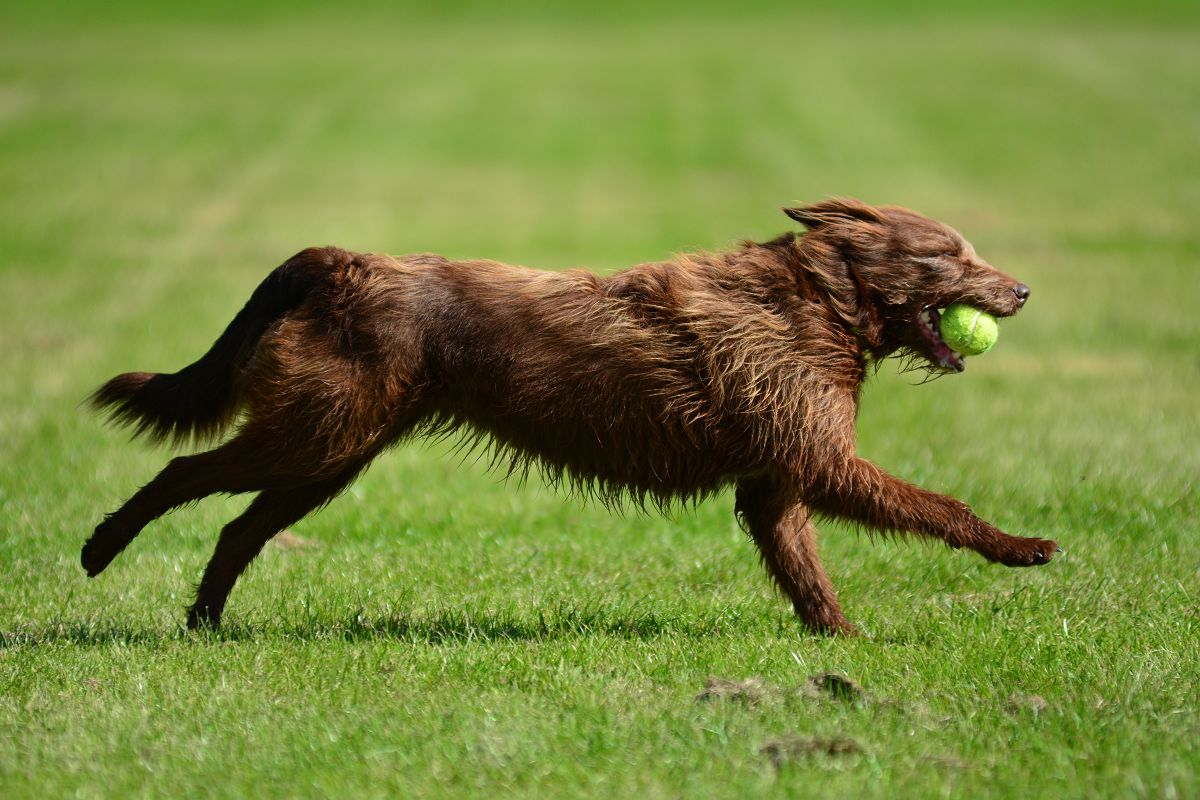 Video Of Dogs Running Arounde