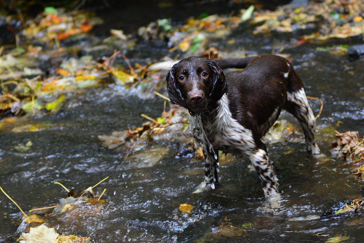 dog standing in stream