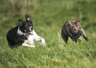 Bond chasing after Molly in Langbank