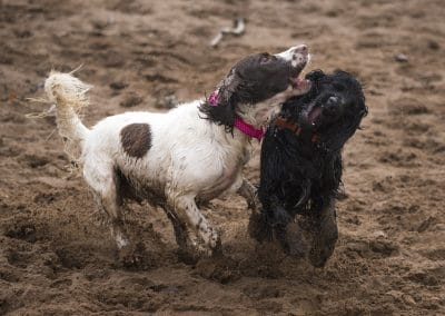 Lexi and Bertie play