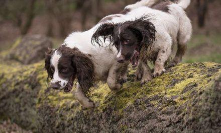 Dog walking pics for April