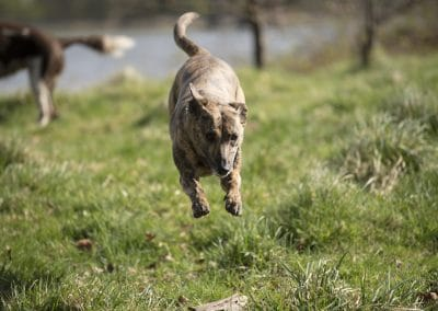 Molly running straight for me
