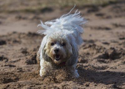 Ollie at Erskine beach