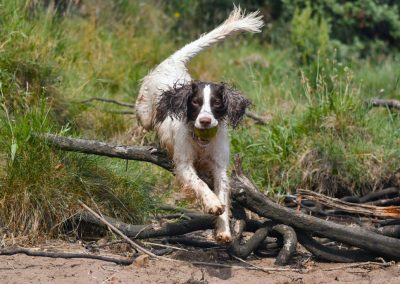 Lexi jumps over some roots with her ball