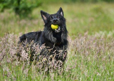Skye with her ball