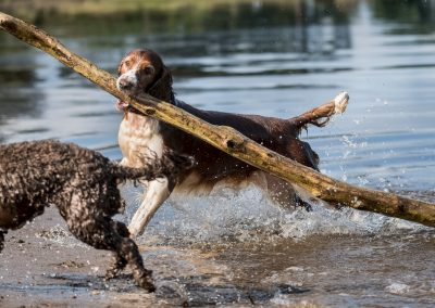 Celyn retrieves a massive branch from the river