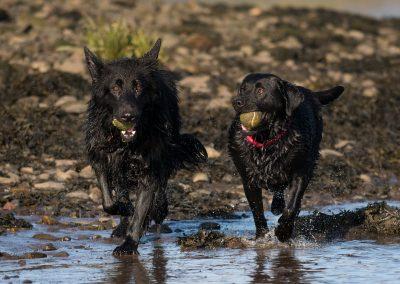 Skye and Roxy on the beach
