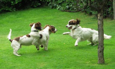 Nevis, Baxter and Bruno come to stay
