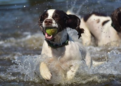 Spaniel with eyes closed