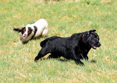 Lexi chasing Roxy