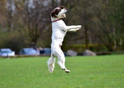 Nevis jumps to catch a ball